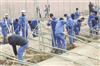 酒鋼集團公司開展義務植樹活動