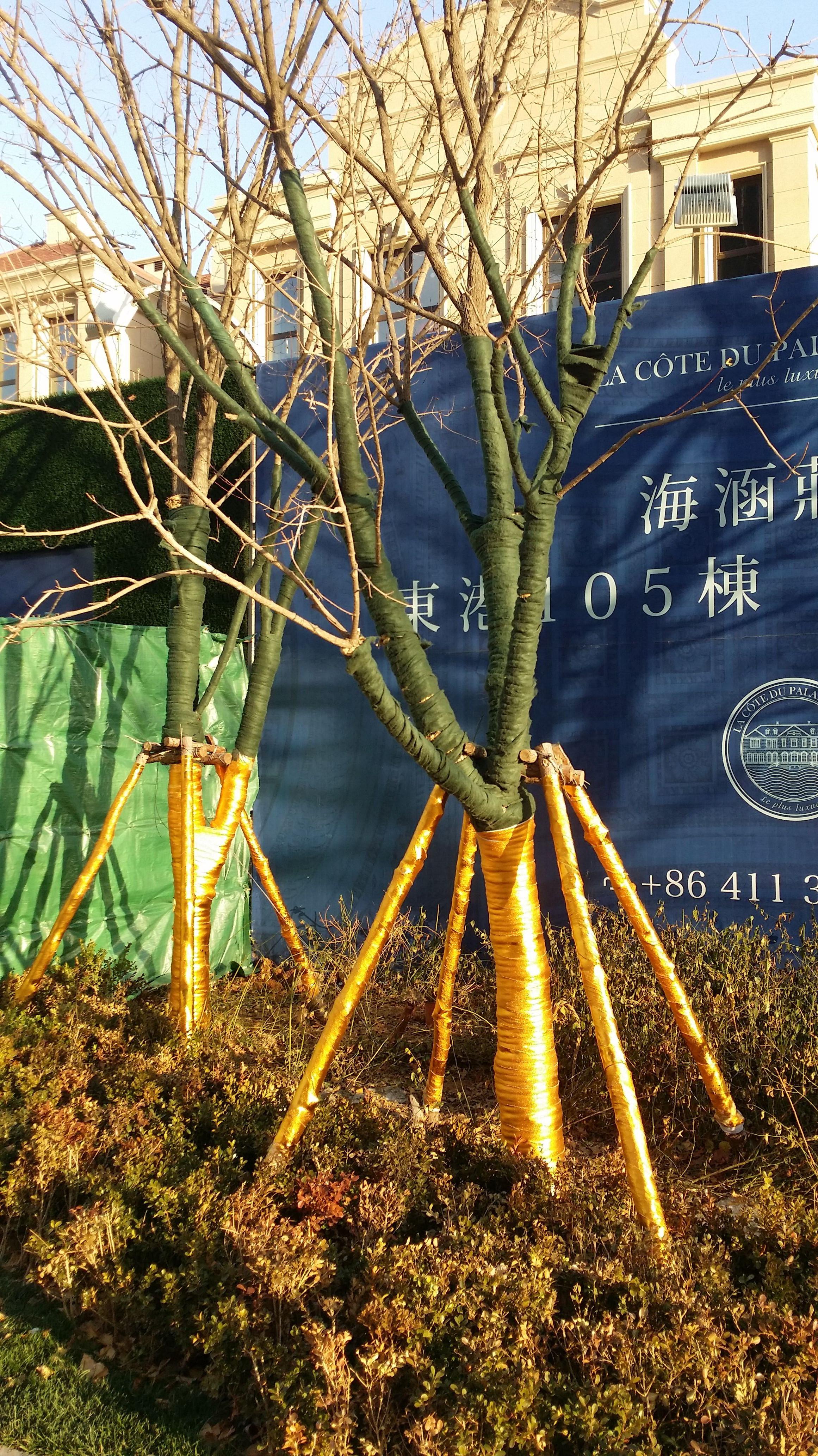 树木包装_亿方广告传媒(大连)有限公司