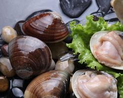 如何挑选贝类海鲜?