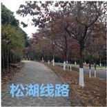 线路:东莞农家乐松山湖松湖生态园自驾游怎么走