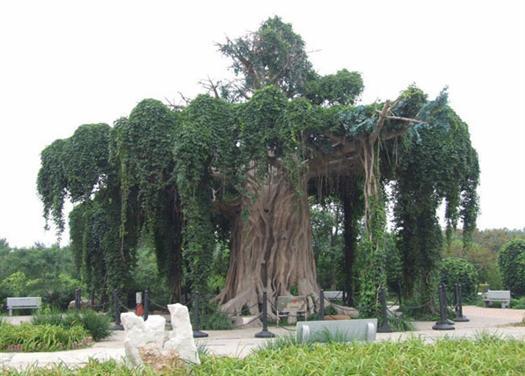 大型仿真樹