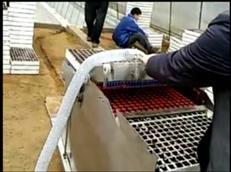 漂盘(泡沫穴)育苗播种机
