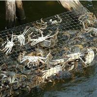 淡水蟹养殖